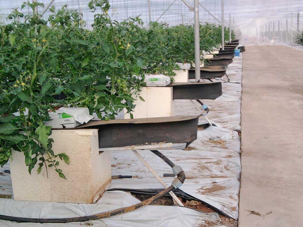 laurus srl agronomi coltivazione idroponica gallery 12