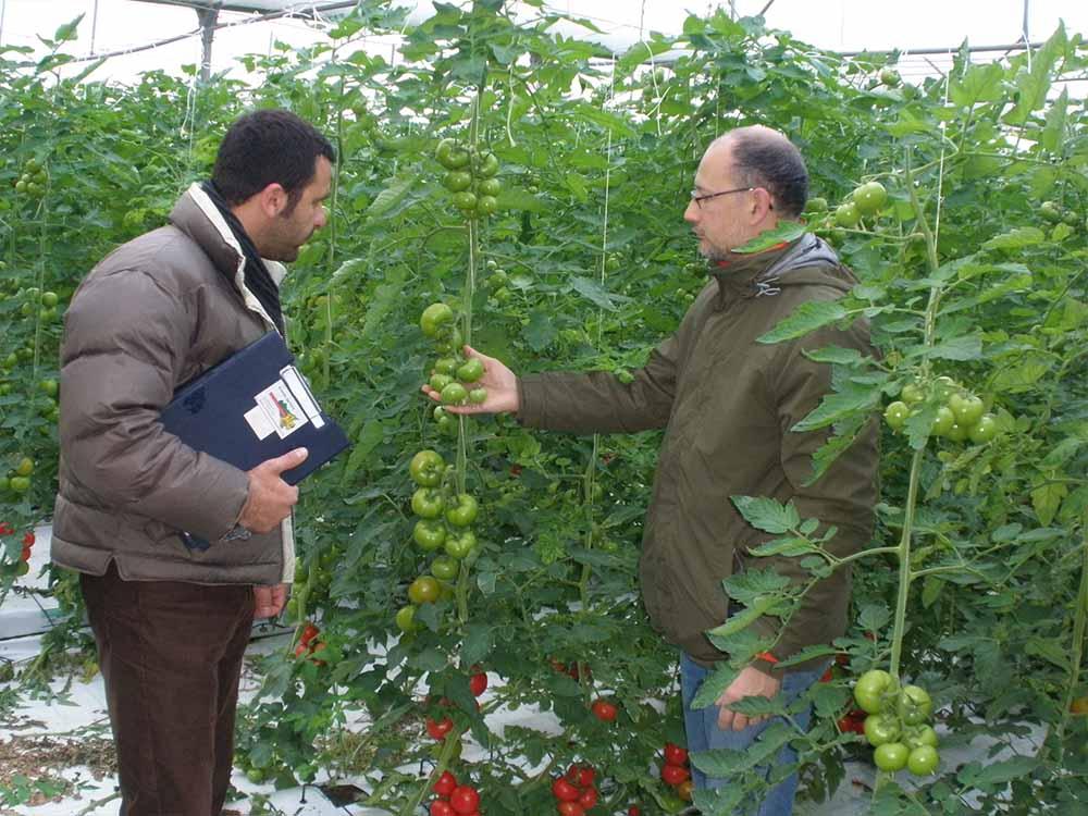 laurus srl agronomi coltivazione idroponica gallery 1740x555