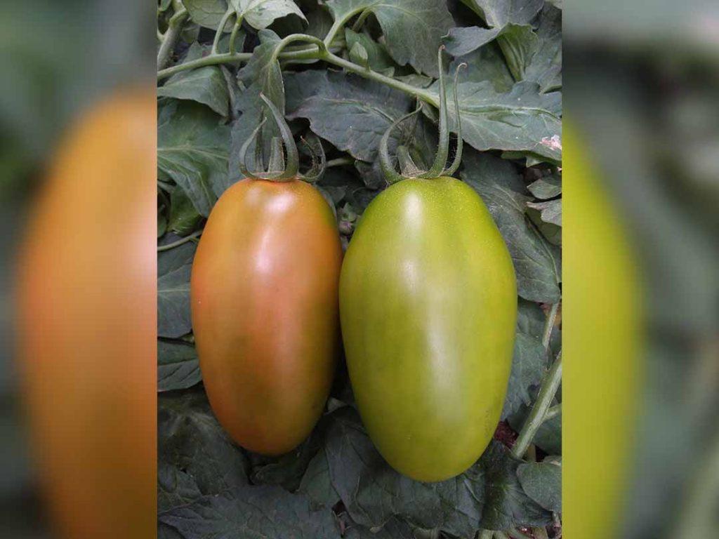 2 cora seeds